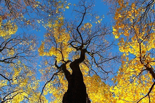 Yellow autumn trees against blue sky