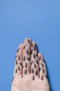 J231:365 - Des fourmis dans les doigts par Clémentine GRAS