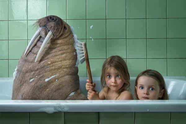 Lavage de morse. © John Wilhelm – Fotolia