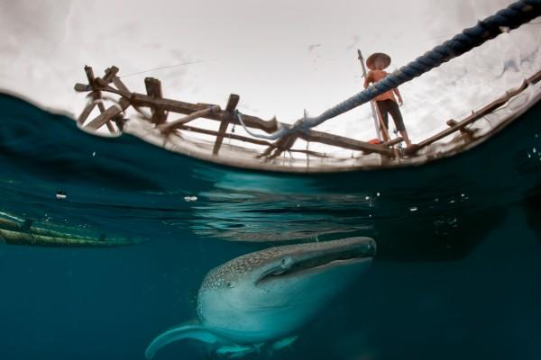 Un requin-baleine sous la plate-forme d'un pêcheur en Papouasie, photo finaliste au concours Travel Photographer of The Year 2012, catégorie One Shot – Water. © Andrea Izzotti – Fotolia