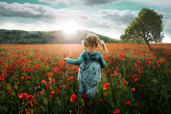 Into the poppies (Dans les coquelicots). © John Wilhelm – Fotolia