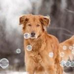 INSPI // Nos amis les chiens !
